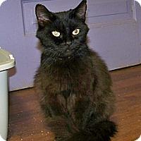 Adopt A Pet :: Sara - Dover, OH