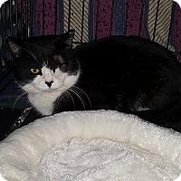 Adopt A Pet :: Uno - Stafford, VA