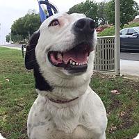 Adopt A Pet :: Pizza - Mission Viejo, CA
