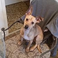Adopt A Pet :: Hermes - Bardonia, NY