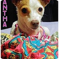 Adopt A Pet :: Samantha - Fowler, CA