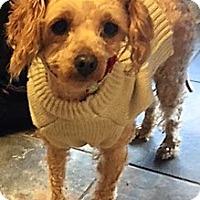 Adopt A Pet :: Mia - Sacramento, CA