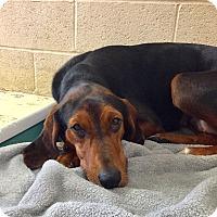 Adopt A Pet :: Nonee - Greensburg, PA