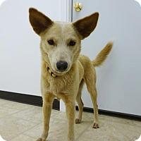 Adopt A Pet :: Leigh - Belleville, MI