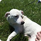 Adopt A Pet :: Babyface