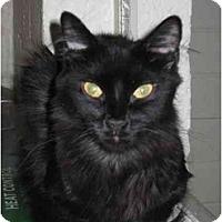Adopt A Pet :: Misty - Scottsdale, AZ