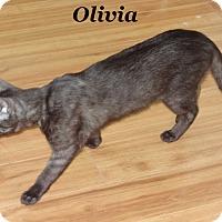 Adopt A Pet :: Olivia - Bentonville, AR