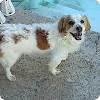 Adopt A Pet :: Mason - Phoenix, AZ