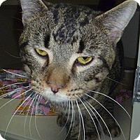 Adopt A Pet :: Hulu - Hamburg, NY