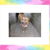 Adopt A Pet :: CASSIE - KELLYVILLE, OK