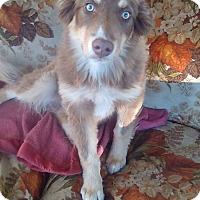 Adopt A Pet :: Einstein - PENDING - Lancaster, PA