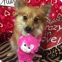Adopt A Pet :: Switzer - Dallas, TX