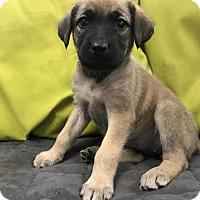 Adopt A Pet :: Jackie - Charlotte, NC