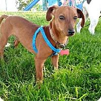 Adopt A Pet :: Otto - Pleasanton, CA