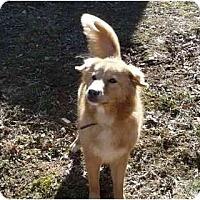 Adopt A Pet :: Misty - Wakefield, RI
