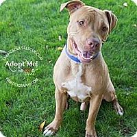 Adopt A Pet :: Rusty - Scottsdale, AZ