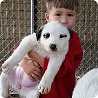 Adopt A Pet :: Panda - New Boston, NH