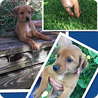 Adopt A Pet :: Esteban - Scottsdale, AZ