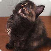 Adopt A Pet :: Diva - Union, KY