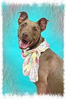 Shepherd (Unknown Type) Mix Dog for adoption in Brookhaven, New York - Winnie