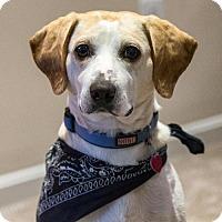 Adopt A Pet :: Ryder - Arlington, VA