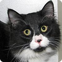 Adopt A Pet :: Chandler - Ruidoso, NM
