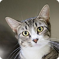 Adopt A Pet :: Maria - St. Petersburg, FL