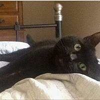 Adopt A Pet :: SINNY - Los Angeles, CA