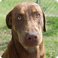 Adopt A Pet :: TIANA - Panama City, FL