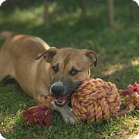 Adopt A Pet :: Jackson - Tallahassee, FL
