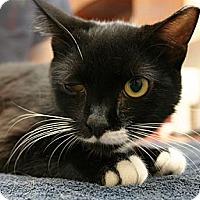 Adopt A Pet :: Hammy - Secaucus, NJ