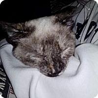 Adopt A Pet :: Serena - Portland, ME