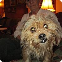 Adopt A Pet :: Little Bit - Sardis, TN