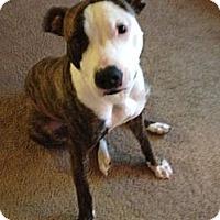 Adopt A Pet :: Hanna - Seattle, WA