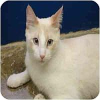 Adopt A Pet :: Tommy - Phoenix, AZ