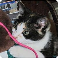 Adopt A Pet :: Copper Sue - Warren, OH