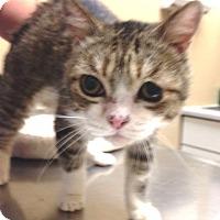 Adopt A Pet :: Eliza C. Little - Beverly Hills, CA