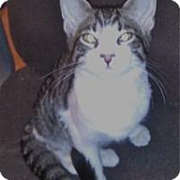 Adopt A Pet :: K-Sasha3-Trevor - Colorado Springs, CO