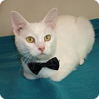 Adopt A Pet :: Casper - Jackson, MS