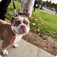Adopt A Pet :: Kona - Huntington Beach, CA