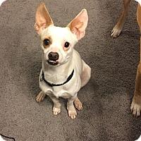 Adopt A Pet :: Nemo - Las Vegas, NV