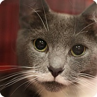 Adopt A Pet :: Dolly - Middletown, OH