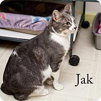 Adopt A Pet :: Jak - Shelton, WA