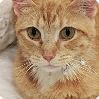 Adopt A Pet :: Saige  Female - Knoxville, TN