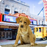 Adopt A Pet :: Orpheum - Fayetteville, AR