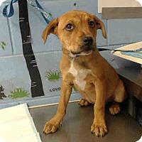 Adopt A Pet :: URGENT on 5/23 SAN BERNARDINO - San Bernardino, CA