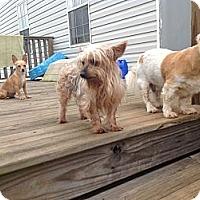 Adopt A Pet :: Mia - Milton, FL