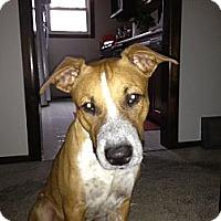 Adopt A Pet :: Jasper CP - Dayton, OH