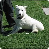 Adopt A Pet :: Tundra - Seattle, WA