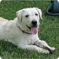 Adopt A Pet :: Andre - Los Angeles, CA
